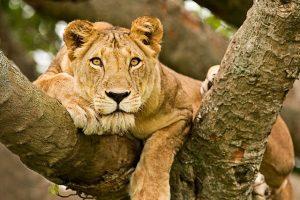 queen-park-safari-uganda